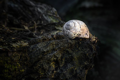 An empty shell (A.Dissing) Tags: white black art light dark contrast a7 a7ii a7m2 sony anders dissing masterpiece super detail fantastic good positive photo pixel mm creative beautiful color composition moment europe artistic other danish denmark danmark different exposure enjoy young unique weather scene awesome dope angle perfect perspective interesting shell empty nature