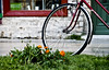 A stop for ice cream! (jimiliop) Tags: bicycle bike flowers grass store window door green red contrast wheel low pov street nafplio orange smileonsaturday springflower201718 flower