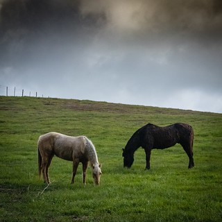 Horses in the Pastor