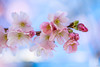 New Life - Spring (Martine Lambrechts) Tags: new life spring blossom nature macro flower