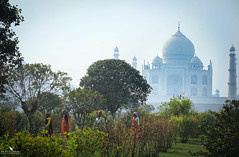 The Taj Mahal (pbmultimedia5) Tags: taj mahal india agra architecture building monument pbmultimedia trees garden yamuna river
