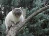 Judy (bego vega) Tags: gato gata cat mascota pet animal bostezo yawn árbol tree madrid vf bego vega veguita bv catalpa jardín garden