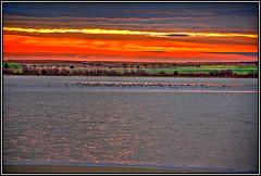 Despertando el amanecer (Jose Roldan Garcia) Tags: amanecer naturaleza nubes luz libertad libre laguna quero toledo flamencos colores cielo agua árboles campo