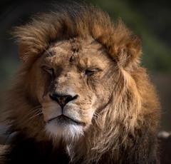 IMGP3019 (nathanmeade_) Tags: melbounrezoowerribee zoo animals tamron pentax k1 pentaxian pentaxk1 werribee melbourne zoos