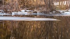 Breaking Ice (Lars Ørstavik) Tags: breakingice ice lake spring reflections landscape icesheet lakevatnevatnet vatnevatnet åmdalen ørsta sunnmøre tree norway golden wintry winter