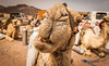 Say what (yarindvash) Tags: camel sini nikon funny tamron