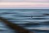 Lightspeed (moritz k.) Tags: larus tiere abstract artsy baltic blur gull larusridibundus lightspeed sea seagull wave zingst