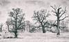 IMGP9865-1-2 kopiaa (Smo_Q) Tags: poland rogalin pentaxk3ii winter oak analogefexpro