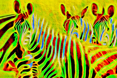 Electric Zebras (D'ArcyG) Tags: zebra animal electric surreal textured vivid colorful abstract patterns africa kenya interpretation impression yellow