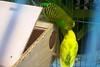 (andreacammila) Tags: nature naturaleza natureza bio pássaro pajaro gaiola
