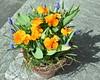 Im Herbst gepflanzt.. (ritsch48) Tags: stiefmütterchen veilchen traubenhyzinthen tulpen krokus
