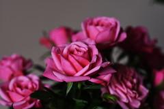 DSC_9086 (PeaTJay) Tags: nikond750 sigma reading lowerearley berkshire macro micro closeups gardens indoors nature flora fauna plants flowers bouquet rose roses rosebuds