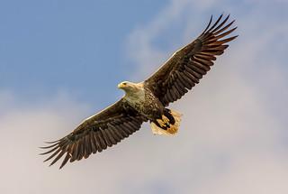 JWL0667  Eagle..