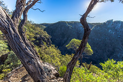 From a bird's perch (Rakuli) Tags: ifttt 500px scenery lush foliage idyllic woods scenic picturesque mountain nonurban scene greenery footpath tree forest bush canyon australia mountains