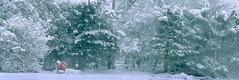 Suburban snow scene 96 (stevensiegel260) Tags: snow snowstorm blizzard trees forest winter shoppingcart newjersey woods