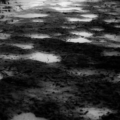 Flooded Banks 014 (noahbw) Tags: captaindanielwrightwoods d5000 desplainesriver dof nikon abstract blackwhite blackandwhite blur bw depthoffield forest landscape light monochrome mud natural noahbw puddle quiet reflection river spring square still stillness water woods