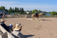 JBC_5699.jpg (Jim Babbage) Tags: krahc bethany appaloosa horses horseshow 2018