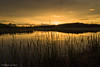 Dorado atardecer. (Roberto_48) Tags: lagunas villalba atardecer sunset dorado reflejo aranda duero ngc
