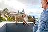 Can I have a go with that Camera (Tony Shertila) Tags: catalanbay gib geo:lat=3613381958 geo:lon=534569755 geotagged gibraltar europe animal barbary ape barbaryape barbarymacaque monkey