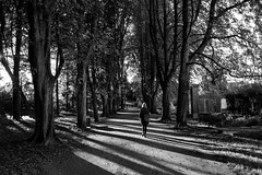 Then you walked away (gambajo) Tags: 1year1town1lens brühl blackandwhite blackwhite black white project park schlosspark shadows woman walk alley trees people street streetphotography x100s fujix100s fujifilmx100s