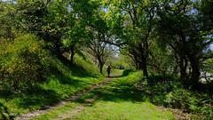 LANNION LE-YAUDET GR34 (claude 22) Tags: lannion yaudet chemin grande randonnée gr34 nature natural verdure green bretagne brittany breizh france landscape panorama paysage 22300 côtesdarmor sentier douaniers hicking path