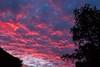 Summer sunset (CarolAnn Photos) Tags: northamptonshire cloud sky sunset trees eydon england unitedkingdom gb