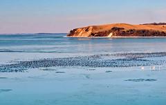 Trubel (Wunderlich, Olga) Tags: landschaft natur wasser vögel schwäne berg schnee kleinzicker groszicker rügen inselrügen mönchgut enten