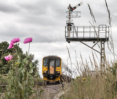 A Clear Road Through Crabley (SydPix) Tags: 155344 class155 crableycreek semaphore signals poppies grass supersprinter dmu diesel unit railways trains sydyoung sydpix