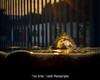 Light Waves (Lex Arias / LeoAr Photography) Tags: 2018 abstract abstracto agua backlight barquisimeto contraluz fineart iglexariasfotografia leoarphotography lexarias lights luznatural luzsolar naturallight nikon nikond3100 venezuela wanderlust water