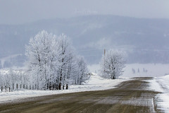 Spring (murph le) Tags: hff spring alberta fog snow fence rural country trees frost