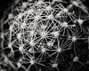Cacti (Dimitar Dt) Tags: minolta1004macro macrophotography 12macro macrolens cactus cacti fujix bnwconversion filmsimulation spines fujilove monochrome blackandwhite naturephotography plants