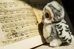 Prof. Rauz studying Chopin (xockisfriends) Tags: professorrauz chopin prèludes music score autograph piano research forschung polen composer owl professor prof