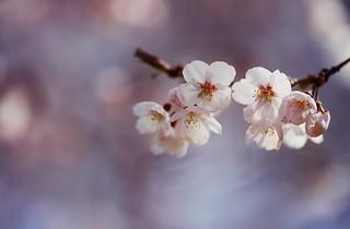 flower 1177