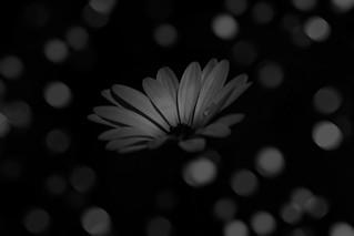 creative daisy