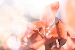 Spring 2018 (janeway1973) Tags: spring frühling garden garten macro makro closeup nahaufnahme colorful farbenfroh bunt flowers blossoms blumen blüten plants pflanzen orchid orchidee