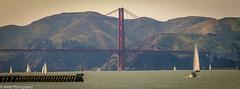 Golden Gate Bridge (Balaji Photography') Tags: california sanfrancisco goldengatebridgetowetower goldengatebridge bayarea sail sails boats boar water bay canon canon70d usa bridges hills mountain scenin