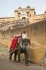 Amber Fort (Rolandito.) Tags: india indien inde rajasthan jaipur amber amer fort elephant