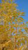 (judith511) Tags: flowers nundle fossickerscaravanpark nsw australia