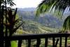 Tabanan sawah view (scinta1) Tags: bali balinese tabanan riceterraces sawah view hillside palms green valley