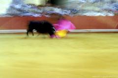 Veronica (Kike Marín.h) Tags: verde bull bullfighter bullfight toro toros torero plazadetoros corridadetoros corrida capote muleta color movimiento moving spain maestranza maestranzasevilla sevilla plazadesevilla