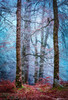 Into the Mystic #4 (Matt Anderson Photography) Tags: 2017 landscape mattandersonphotography scotland uk unitedkingdom hoarfrost magical color nopeople river garry loch oich invergarry december winter lush nature frost frosted fragility ethereal woodland tree outdoors paranormal mystery fantasy tranquilscene fog sunrisedawn coldtemperature scenics traveldestinations autumn idyllic meadow ephemeral emergence majestic ruralscene beautyinnature beechtree moss root perthshire theend