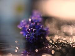 D A Z Z L I N G (Vivi Black) Tags: composition summer june drops beauty reflection light goldenhour blure nature sparkling bokeh