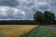 Bei mir im Münsterland V (Werner D.) Tags: münsterland westmünsterland color landscape landschaft sommer felder acker