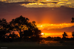 Sunset in the Okavango Delta (He Ro.) Tags: 2018 botswana sonnenuntergang sunset grass gras bäume himmel landscape outdoors shindeprivateconcession afrika africa dämmerung colourful southernafrica südlichesafrika okavangodelta trees silhouettes coth wilderness stunning coth5
