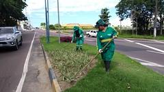21.06.18 Ornamenta Manaus intensifica manutenção dos jardins em canteiros centrais