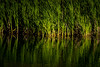 in the thick of it (Aaron_Smith_Wolfe_Photography) Tags: weeds wetlands washoevalley nevada sierra mountains water lake pond