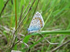 Butterfly 1685 (+1200000 views!) Tags: butterfly borboleta farfalla mariposa papillon schmetterling فراشة