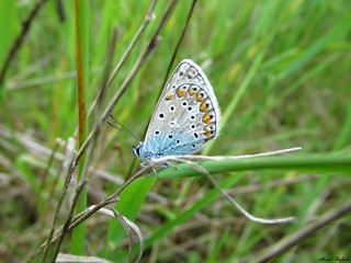 Butterfly 1685