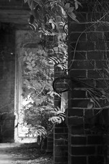 Gang - corridor (SchuhSchone) Tags: verlasseneorte lostplaces verlassen leave spuk spook alt old geist geister ruine ruin
