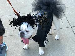 Canadian Canine (e r j k . a m e r j k a) Tags: canada québec stjovite monttremblant canine dog whimsy sidewalk erjk